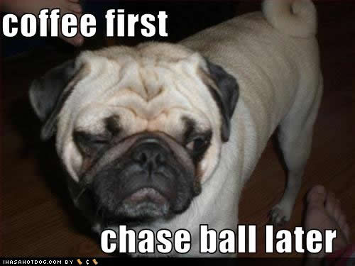 pugs and caffeine is a dangerous mix