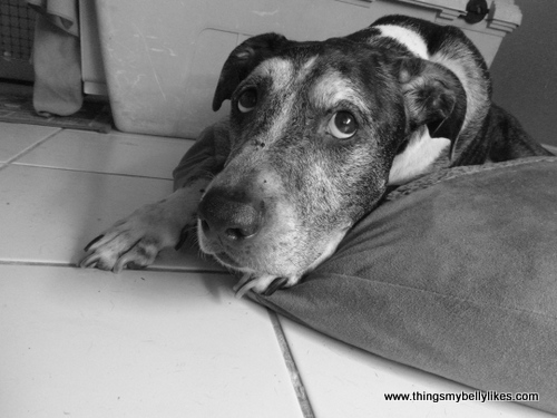 this marks the first time Dog has made an appearance on this blog..isn't he handsome?