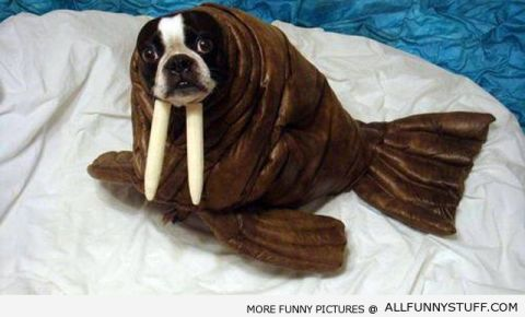 it took me a minute to see the dog and not the walrus (source)