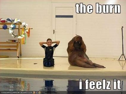 just when you think the internet can't get any better there's a walrus doing sit-ups