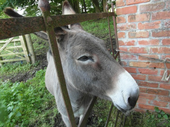 a very friendly donkey in County Down. Moments after this he sneezed on a baby and it was hilarious